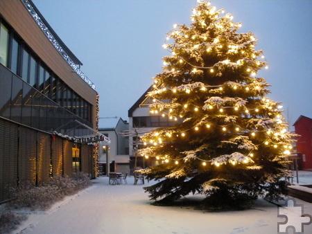 So groß wie dieser Christbaum am Mechernicher Rathaus sind die Weihnachtsbäume nicht, die die TuS Mechernich am 20. Dezember in der Mechernicher City (Nähe Volksbank) verkauft. Bis 1,80 Meter kosten die Exemplare pauschal 30 Euro, höhere 38 Euro. Archivfoto: pp/Agentur ProfiPress