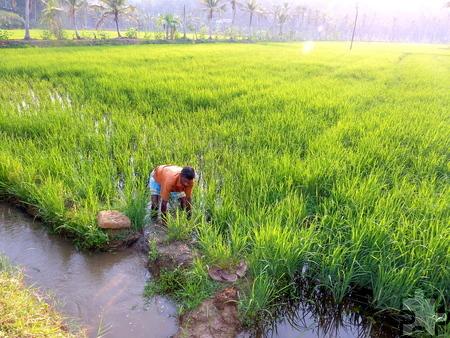 Reisbauern wurde gezeigt, wie sie in den Wasserkanälen ihrer Felder Fischzucht betreiben können. Foto: Dr. Franz Richter