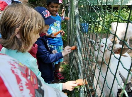 Den Ziegen des Mechernicher Tierheimes schmeckten die Möhren, mit denen die Herhahner Kinder sie fütterten. Foto: Renate Hotse/pp/Agentur ProfiPress