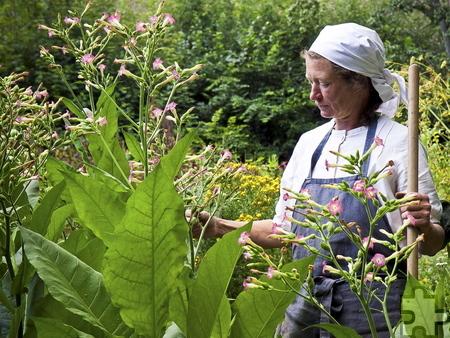 """Annette Meylahn als """"Bäuerin Anna Ippendorf"""" in ihrem Bauerngarten im Kommerner LVR-Freilichtmuseum. Foto: Michael Faber/LVR/pp/Agentur ProfiPress"""