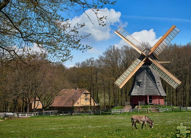 Die restaurierte Kappenwindmühle in der Museumsbaugruppe Niederrhein. Foto: Hans-Theo Gerhards/LVR/pp/Agentur ProfiPress