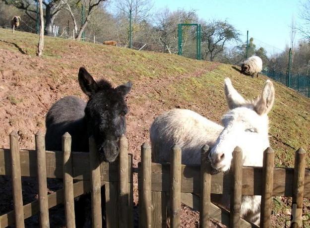 Esel und Schafe weiden am Tierheim Burgfey. Dort findet am Sonntag, 12. Juni, von 11 bis 17 Uhr wieder ein Trödelmarkt zugunsten der dort befindlichen Tiere statt. Archivfoto: pp/Agentur ProfiPress