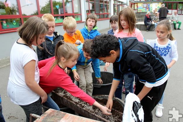 Emsig bei der Sache: Die Zweitklässler mischten Hornspäne unter die Pflanzerde. Foto: Kirsten Röder/pp/Agentur ProfiPress