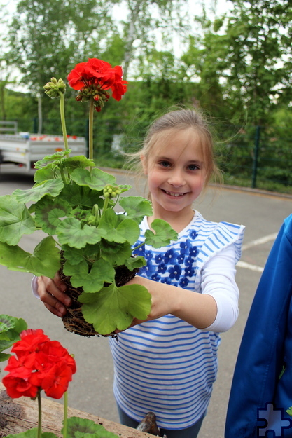 Luisa Schneider hatte zusammen mit ihren Mitschülern eine Menge Spaß bei der Pflanzaktion. Die fertigen Blumenkästen werden in den Gassen und an den Brücken von Kommern aufgehängt. Foto: Kirsten Röder/pp/Agentur ProfiPress