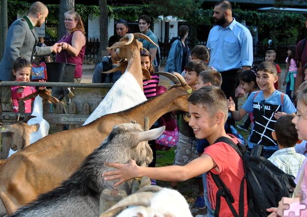 Begeistert streichelten und fütterten die Mechernicher Flüchtlingskinder die Ziegen des Hochwildparks Kommern. Foto: Renate Hotse/pp/Agentur ProfiPress