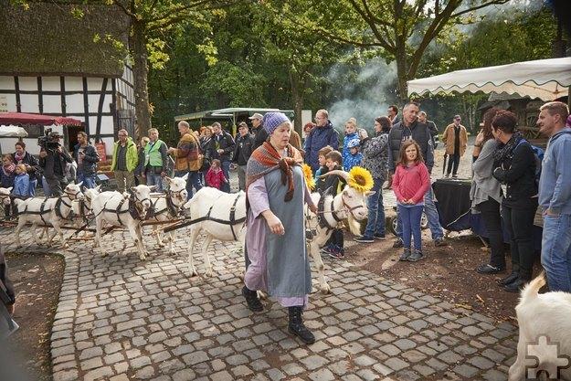 Auch ein Ziegengespann wird im Korso, der an beiden Tagen jeweils um 12 Uhr startet, mitziehen. Foto: Hans-Theo Gerhards/LVR/pp/Agentur ProfiPress
