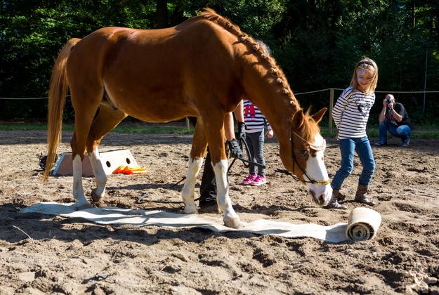 Neben den Vorführungen der Johanniter-Rettungshundestaffel gibt es auch Darbietungen mit Pferden. Foto: Mario Kaspers/pp/Agentur ProfiPress