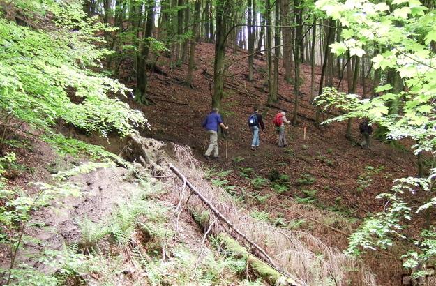 """Die spirituell begleiteten Wanderungen werden vom Netzwerk """"Kirche im Nationalpark Eifel"""" veranstaltet. Foto: Bistum Aachen/pp/Agentur ProfiPress"""