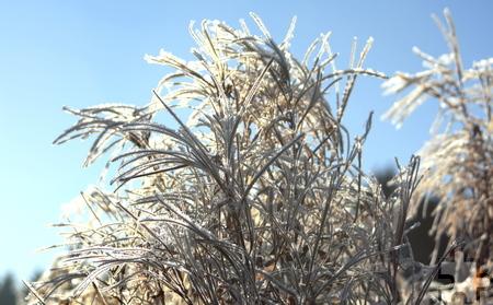 So könnte der Ausblick bei der winterlichen Wanderung sein: Waldweidenröschen im Frost auf dem Weg zum Waldkapellchen in Hellenthal. Foto: Paul-Joachim Schmülling/pp/Agentur ProfiPress