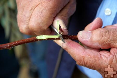 Obstbaumschnitt trägt zu einem guten Ernteertrag bei. Foto: LVR-FMK/pp/Agentur ProfiPress
