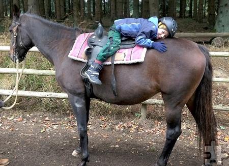 """Vertrauen zwischen Pferd und Reiter ist eine Grundvoraussetzung, dies sollen die Kinder auf spielerische Art und Weise bei """"Rider´s Way Out"""" lernen. Foto: Simone Artar/pp/Agentur ProfiPress"""