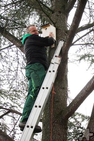 Arbeitstherapeut Volker Nietmann befestigt einen der Nistkästen im Baum. Foto: Steffi Tucholke/pp/Agentur ProfiPress