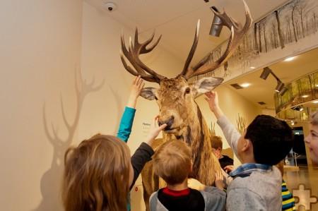 """Endlich einmal ein Hirsch zum Anfassen – im Nationalpark-Zentrum Eifel in der Ausstellung """"Wildnis(t)räume"""". Foto: Roman Hövel/Vogelsang IP/pp/Agentur ProfiPress"""