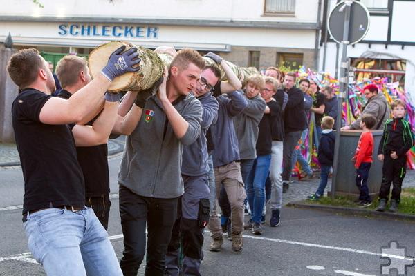 Mit vereinten Kräften trugen die jungen Männer den Baum. Foto: Paul Düster/pp/Agentur ProfiPress
