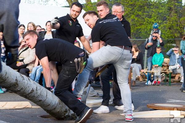 Teamarbeit war gefragt, um den großen Maibaum zu platzieren. Foto: Paul Düster/pp/Agentur ProfiPress